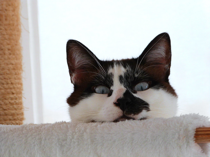 cat peeking over couch
